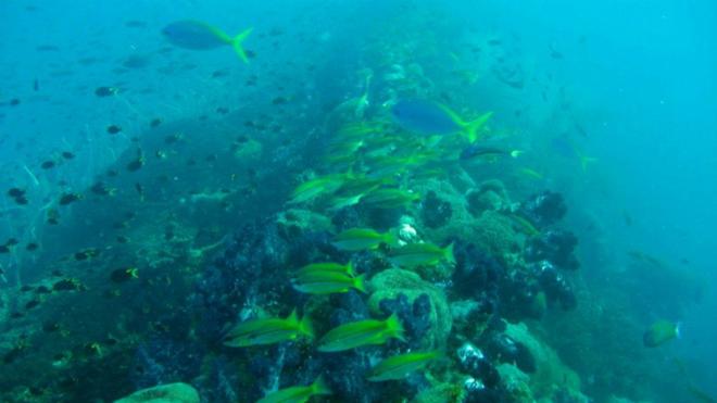 Top 10 Shipwreck dives 10  Top 10 Shipwreck dives Top 10 Shipwreck dives 10