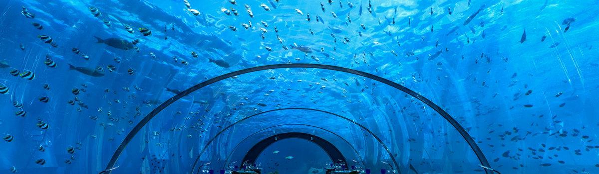 underwater-restaurants-hurawalhi-511 best underwater restaurants Take a Look at the Best Underwater Restaurants in the World underwater restaurants Hurawalhi 511