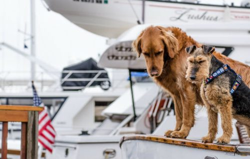 Looking for dog-friendly yachts? We have three examples